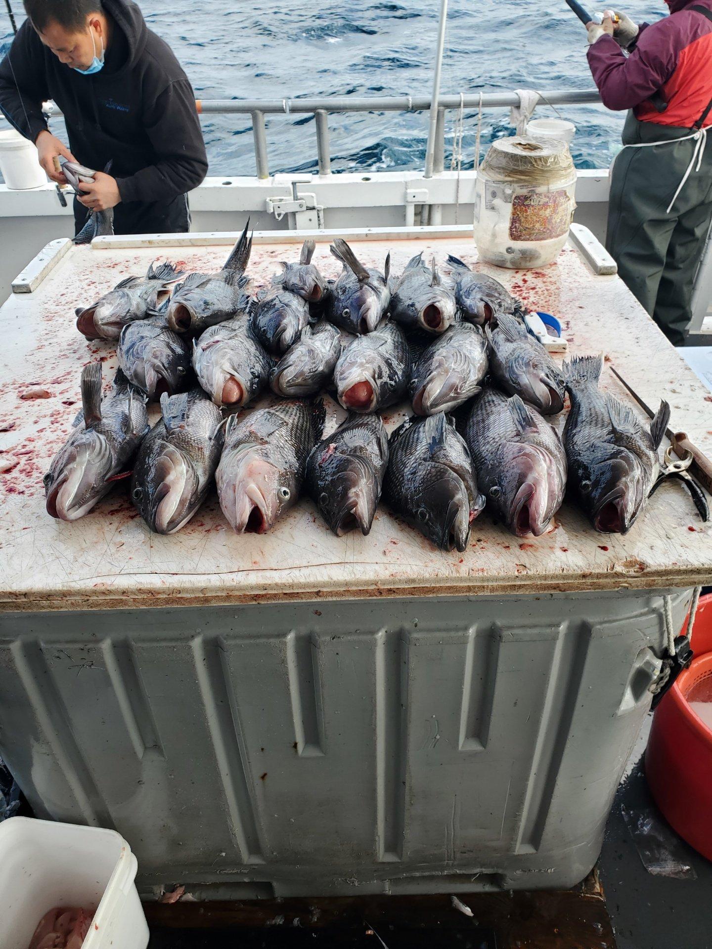 Black Sea Bass on Table